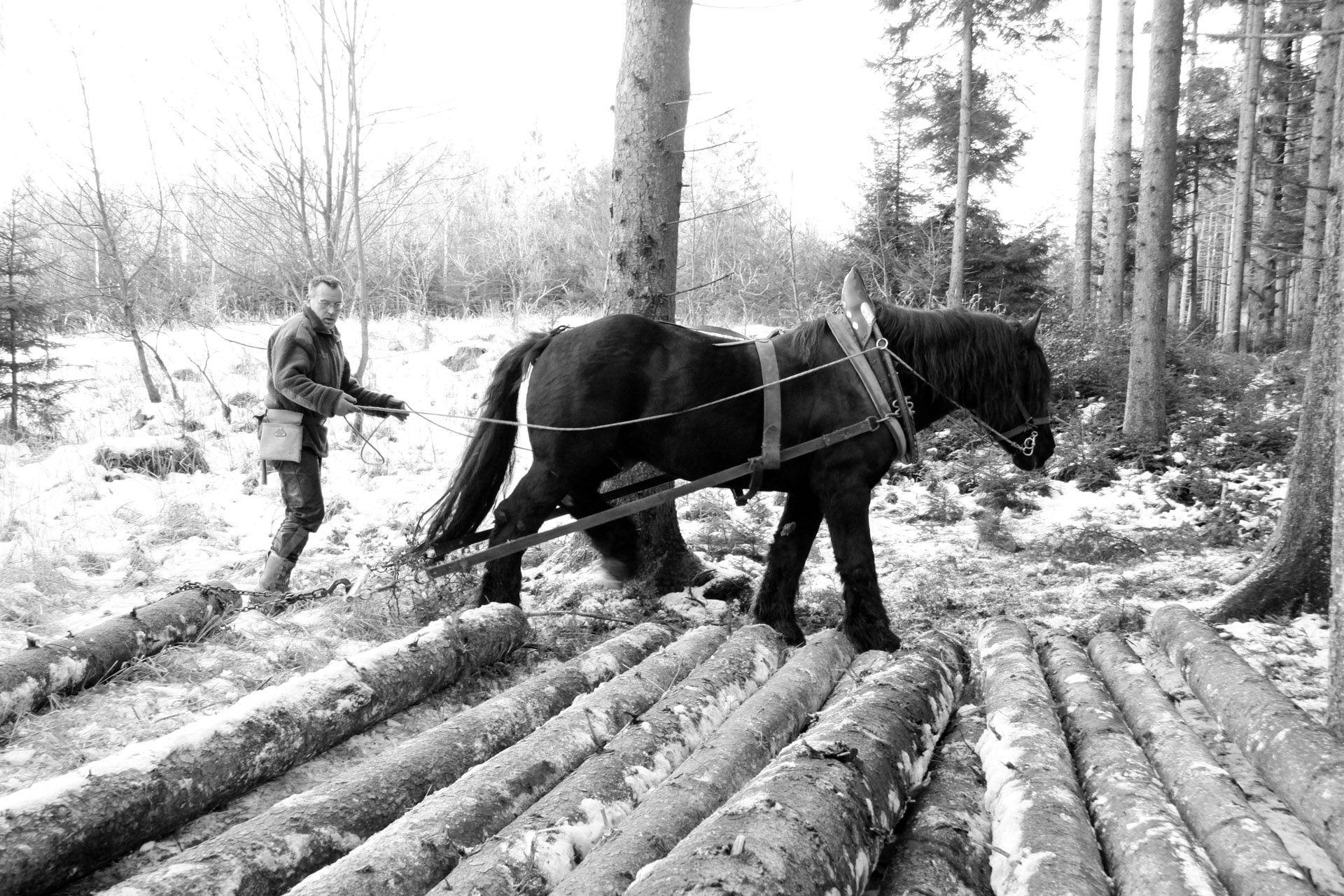 Holzrücken mit Pferd   fotowerkstatt-bernard